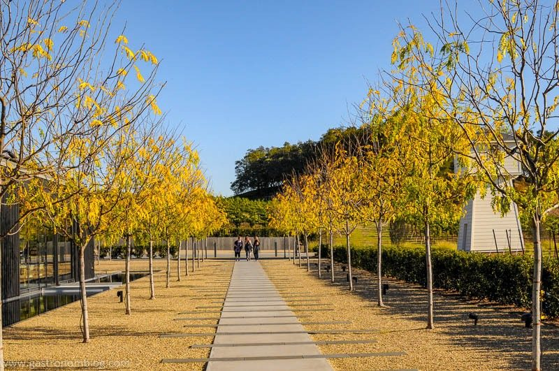 Beatuifully manacured grounds and walkway bordered by birch trees with yelllow leaves leads to the tasting room at Silver Oak Alexander Valley Winery.