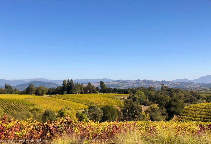 Vineyards strech out on the rolling hills of Sonoma County, with bright blue skies above.