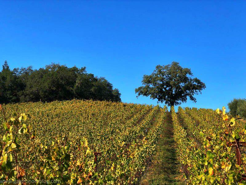 Wine Safari at Thomas George Estate