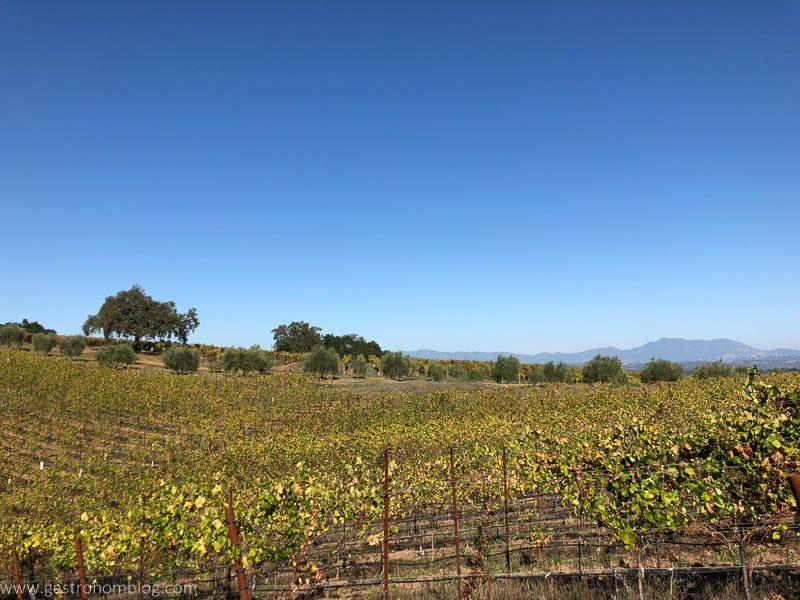 Vineyard views, blue sky