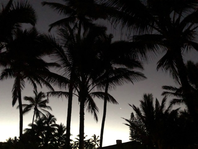 Palm trees at dawm with a little light behind